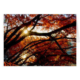デイトン、オハイオ州のコックス植物園の日の出 カード