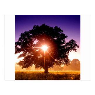 デボンイギリス木の生命の樹 ポストカード