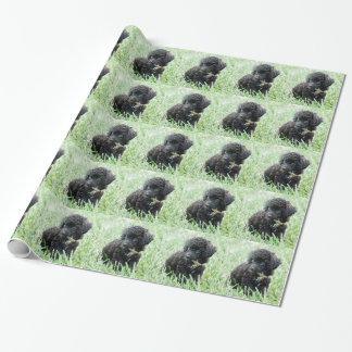 トイプードルの子犬 包装紙