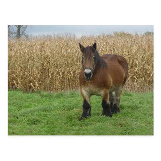 トウモロコシ畑の前部馬のベルギー人の草案 ポストカード