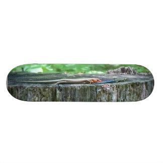 トカゲ板! 18.4CM ミニスケートボードデッキ