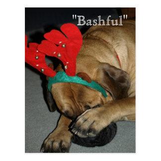 トナカイの(雄ジカの)枝角を搭載する内気な英国のマスティフ犬 ポストカード