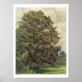 トネリコの勉強、c.1851 (窓ガラスの紙の油 ポスター