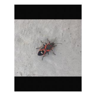 トネリコバカエデのカブトムシ レターヘッド
