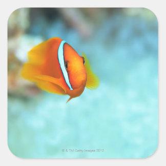 トマトのアネモネ魚、沖縄、日本のクローズアップ スクエアシール