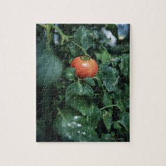 トマト ジグソーパズル