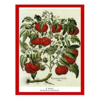 トマト ポストカード
