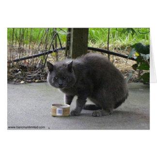 トムホームレスの猫 カード
