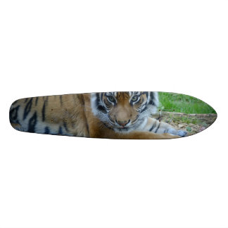 トラの熟視 19.7CM スケートボードデッキ