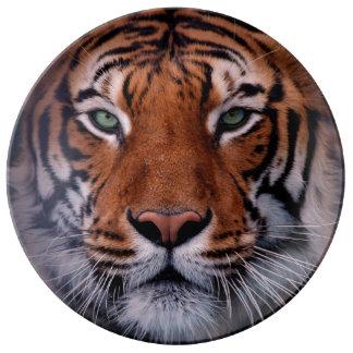 トラの顔は素晴らしい大きな猫を注目します 磁器プレート