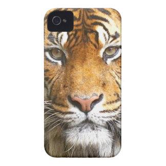 トラの顔iphone4の場合 Case-Mate iPhone 4 ケース