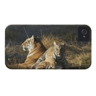 トラ(ヒョウ属チグリス川)は彼のにあることをcub Case-Mate iPhone 4 ケース