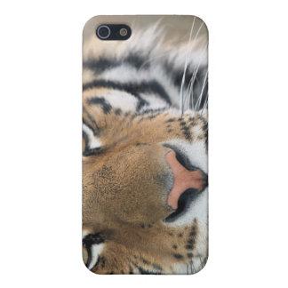 トラ iPhone 5 COVER