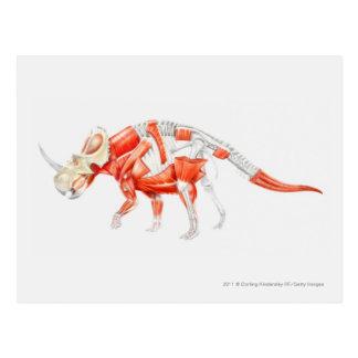 トリケラトプスの筋肉システムのイラストレーション ポストカード