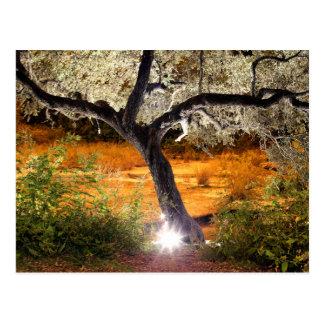 トリップ(幻覚体験)のようななオークの木 ポストカード