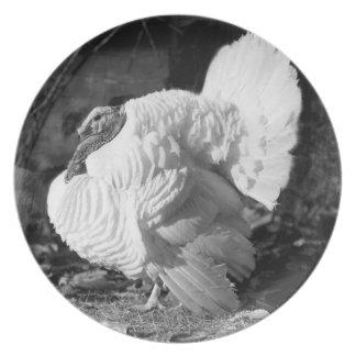 トルコの白黒写真 プレート