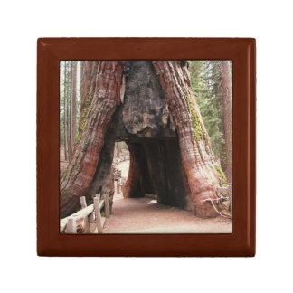 トンネルの木ヨセミテ ギフトボックス