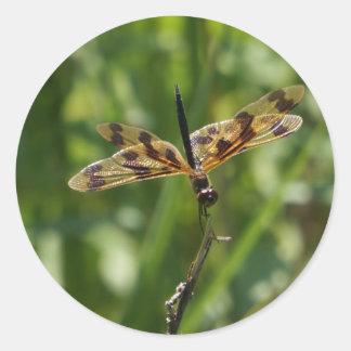 トンボ黄色い田園クイーンズランドオーストラリア ラウンドシール