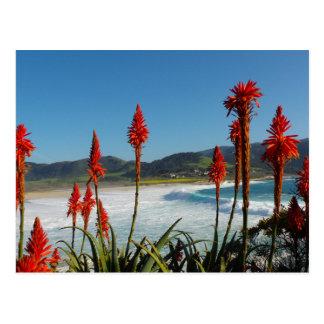 トーチのアロエの花が付いているCarmelポイントビーチ ポストカード