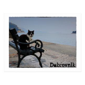 ドゥブロブニク猫 ポストカード