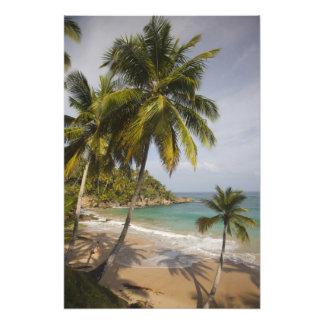 ドミニカ共和国、北岸、アブレウ、Playa フォトプリント