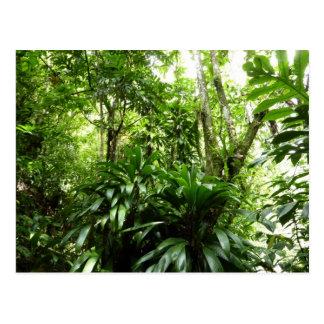ドミニコ共和国の熱帯雨林Iの熱帯緑の自然 ポストカード