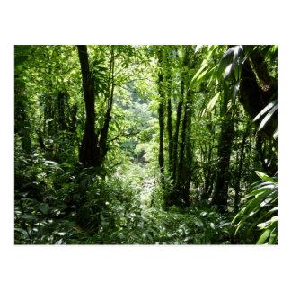ドミニコ共和国の熱帯雨林IIの熱帯緑 ポストカード