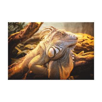 ドラゴンのイグアナの名前のフレッドの包まれたなキャンバス キャンバスプリント