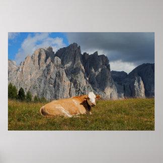 ドロマイトの背景が付いているカメラを見ている牛 ポスター