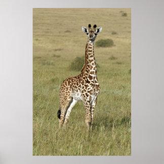 ナイロビの赤ん坊のキリン ポスター