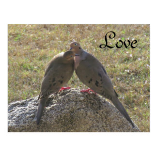 ナゲキバトの鳥愛郵便はがき ポストカード