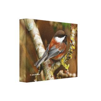 ナシ木のかわいいクリに支えられる《鳥》アメリカゴガラ キャンバスプリント