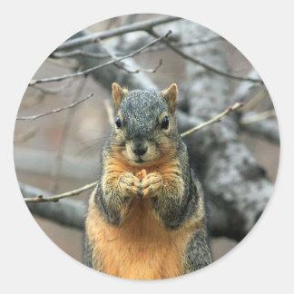ナットを食べているリス ラウンドシール