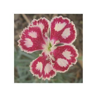 ナデシコの赤い白い花 ウッドウォールアート