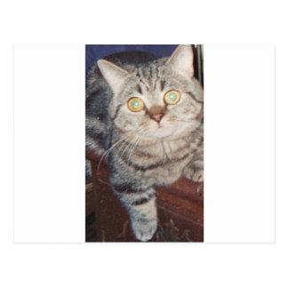 ナポレオン猫 ポストカード