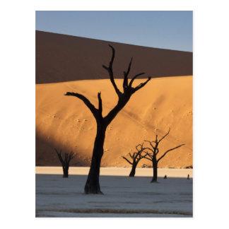 ナミビアのナミブ砂漠、Sossusvlei、 ポストカード