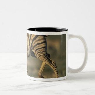 ナミビアのEtoshaの国立公園、若い平野 ツートーンマグカップ