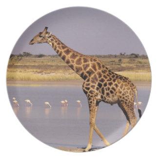 ナミビア: Etoshaの国立公園 プレート