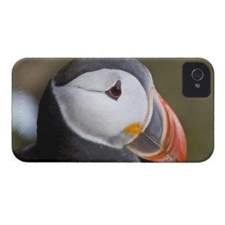 ニシツノメドリ、示されている遠洋の海鳥 Case-Mate iPhone 4 ケース