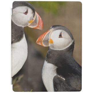ニシツノメドリ、示されている遠洋の海鳥 iPadスマートカバー