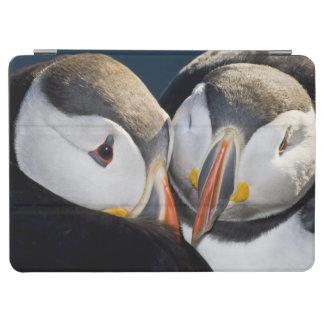 ニシツノメドリ、3つを示されている遠洋の海鳥 iPad AIR カバー