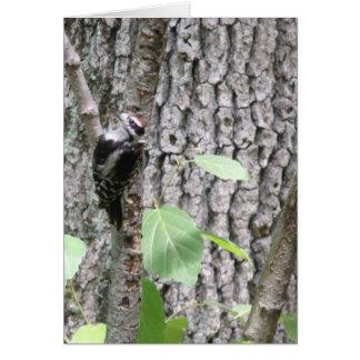 ニュージャージーの森のキツツキ カード