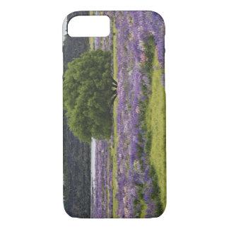 ニュージーランドの南島。 咲くlupine iPhone 8/7ケース