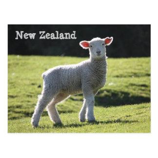ニュージーランド-見ている愛らしい子ヒツジ ポストカード