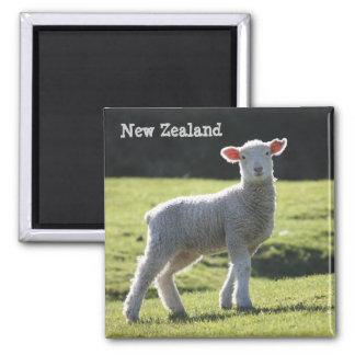 ニュージーランド-見ている愛らしい子ヒツジ マグネット