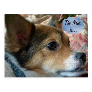 ニュース犬の郵便はがき ポストカード