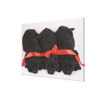 ニューファウンドランドの子犬の睡眠(イヌ属 キャンバスプリント