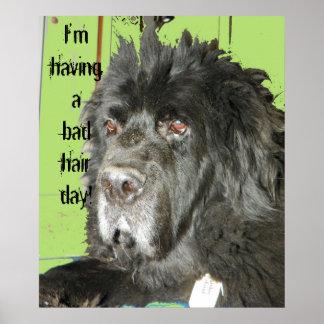 ニューファウンドランド犬の悪い毛日ポスター ポスター