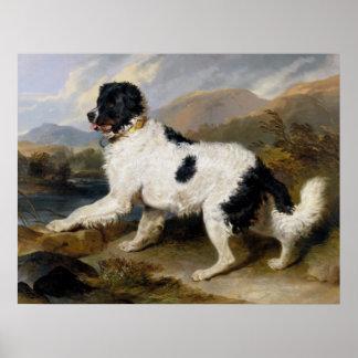 ニューファウンドランド犬の絵画 ポスター