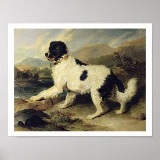 ニューファウンドランド犬はLion 1824年を電話しました(キャンバスの油) ポスター